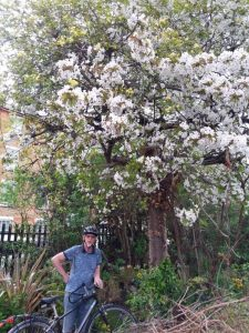 Photo of man in front of cherry tree with blossom