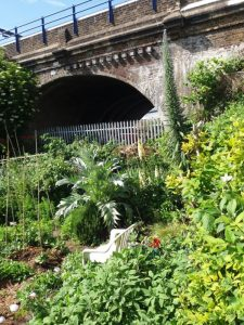 Photo of an allotment garden with railway arch behind