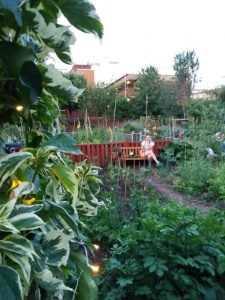 Photo of a woman sitting in an allotment garden