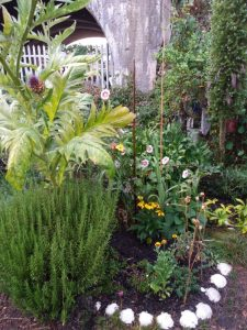 Photo of an allotment garden