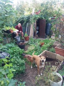 Photo of man and dog in allotment garden