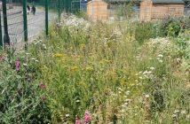 Photo of wildflower meadow at Stepney City Farm